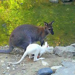 Скопската зоолошка градина доби несекојдневна принова
