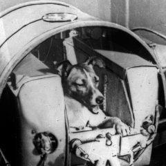 Вистината за Лајка, првото куче во вселената