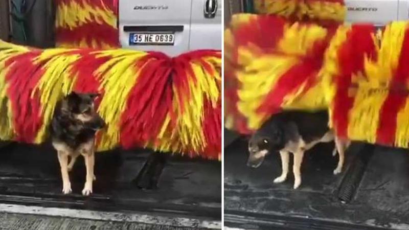 Улично куче доаѓа на бањање во автоперална