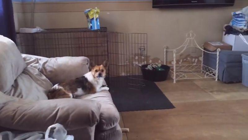 Смешни видеа со палави домашни миленици