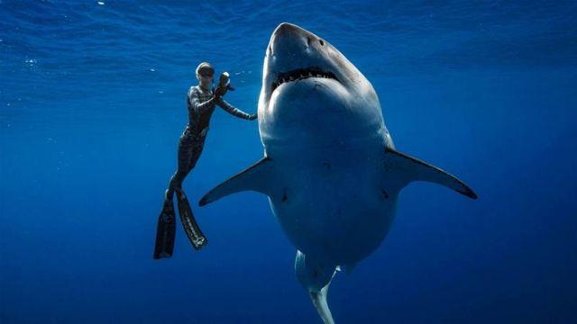 Најголемата ајкула на светот видена во водите кај Хаваи