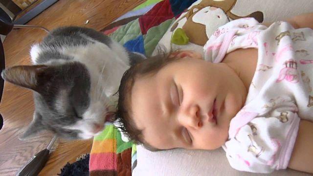 Прекрасни бебиња и мачиња