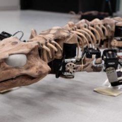Од скелет на праисториски гуштер до робот што се движи
