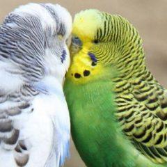 Како влијае еволуцијата на интелигенцијата во изборот на партнер