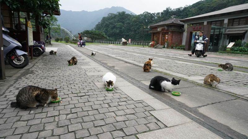 Село во Тајван е рај за љубителите на мачки