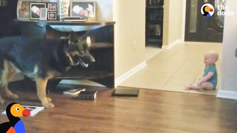 Погледнете како бебе и куче играат криенка