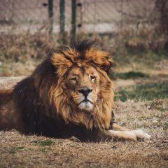 Во Скопје ЗОО целосно ќе се реновираат живеалиштата за кенгури и лавови