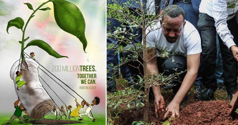 Во Етиопија ќе се засадат 200 милиони стебла за еден ден