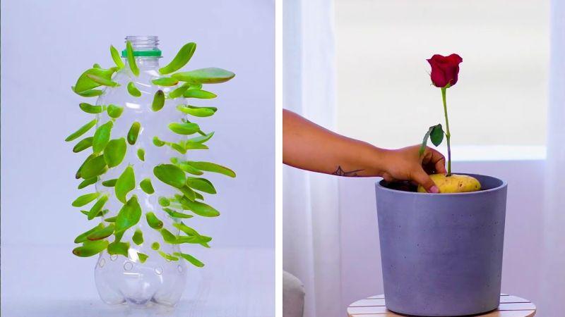 Брзи и едноставни начини да ги потхраните цвеќињата и да насадите нови