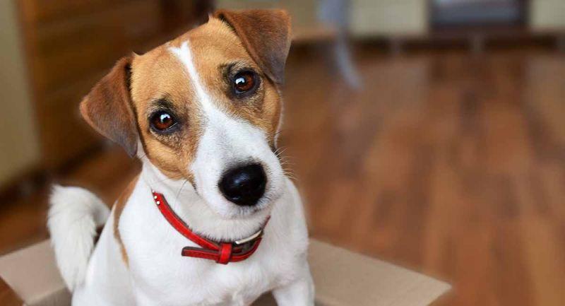 Нов начин на сметање на староста на кучињата